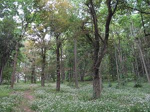 Hadwen Arboretum - Hadwen Arboretum