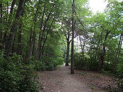 Hammond Pond Reservation, Chestnut Hill MA.jpg