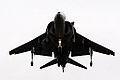 Harrier (5168691405).jpg