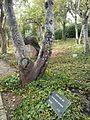 Henri Reynders tree2.jpg