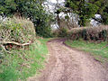 Higher Metcombe track - geograph.org.uk - 185520.jpg