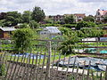 Hill Road Allotments, Birkenhead - IMG 0573.JPG