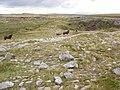 Hill ponies on Cefn yr Ystrad - geograph.org.uk - 933148.jpg