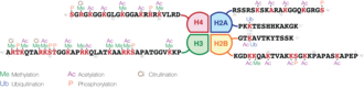 Histone - Schematic representation of histone modifications. Based on Rodriguez-Paredes and Esteller, Nature, 2011