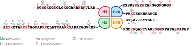 Schematic representation of histone modifications. Based on Rodriguez-Paredes and Esteller, Nature, 2011