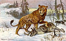 Lion  Wikipedia Cave Lion Panthera Spelaea With A Reindeer Painting By Heinrich Harder