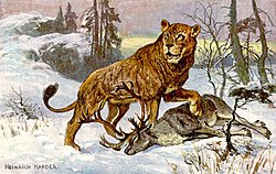 250px-Hoehlenloewe_CaveLion_hharder dans LION