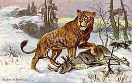 LE FOLKLORE AUTOUR DE  Werecat (était chat) dans CHAT 260px-Hoehlenloewe_CaveLion_hharder