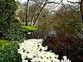 Holandia Keukenhof - panoramio (13).jpg