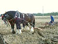 Horse-drawn plough - geograph.org.uk - 253455.jpg