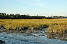Dreher Island State Park Prosperity Sc