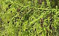 Im Hartensteiner Wald..2H1A2289WI.jpg