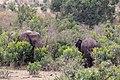 Impressions of Serengeti (128).jpg