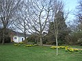 In the grounds of County Hall, Exeter - geograph.org.uk - 1768826.jpg