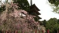 File:Indian Deities Worshipped in Japan(Abridged version).webm