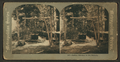 Indian kitchen in No.Dak, from Robert N. Dennis collection of stereoscopic views.png