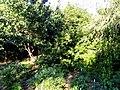 J. C. Raulston Arboretum - DSC06241.JPG