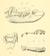 J. W. Gidley (1906) P. l. simus.png