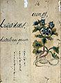 Japanese Herbal, 17th century Wellcome L0030073.jpg