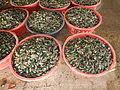 Jf245Mussels Perna viridis Obandofvf.JPG