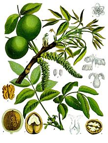 Image dari Wikipedia
