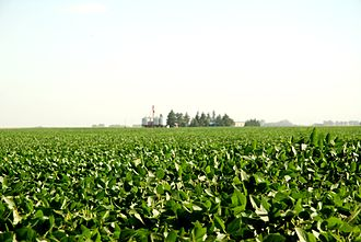 Food industry - A soybean field in Junin, Argentina