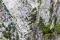 Juniper on the cliffs, Hançerderesi 02.jpg