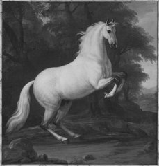 Karl XI:s livhäst Precieux