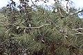 Kattoudhia-Mylikouri Nature Trail - panoramio (25).jpg