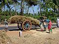 Kerala si03-0739.jpg
