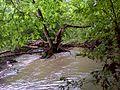 Kis-Hanta patak áradáskor (Kis-Hanta stream at flood) - panoramio (4).jpg