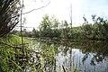 Kolyvansky District, Novosibirsk Oblast, Russia - panoramio - Alexey Bukhtiyarov (4).jpg