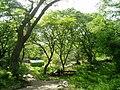 Korea-Seosan-Buseoksa-Near forest-04.jpg