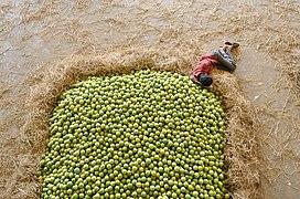 Kothapet Fruit Market.jpg