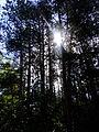 Krajobraz leśny.JPG