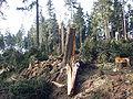 Kyrill-Schäden-08.JPG