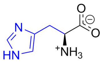 Aromatization - Zwitterionic form of histidine, with the aromatic side chain including an imidazole functionality shown in blue