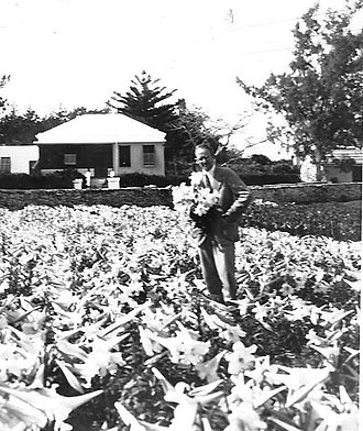 Lawrence Ogilvie - In one of Bermuda's 204 lily-bulb fields, 1926
