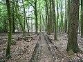 Landschaftsschutzgebiet Horstmanns Holz Melle -Dschungel- Datei 1.jpg