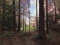 Landschaftsschutzgebiet Strothheide Melle Datei 19.jpg