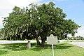 Lanier's Oak, Brunswick, GA, US.jpg