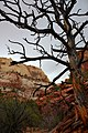 Large Dead Tree in Front of Cliffs dyeclan.com - panoramio.jpg