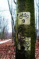 Lasy okolic Dlugiej Gosliny (5).JPG