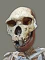 Le musée de préhistoire (Tautavel) (14498001839).jpg