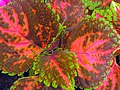 Leaves in iran برگ گلها و گیاهان ایرانی 27.jpg
