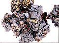 Leptogium cyanescens-6.jpg
