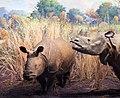 Lesser One Horned Rhinoceros Rhinoceros Sondaicus (53549614).jpeg