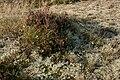 Lichen-heah2.jpg