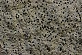 Lichen (26756647678).jpg