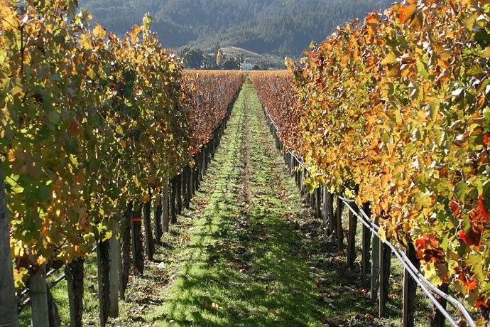 Lightmatter vineyard